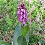 Una orchidea endemica.