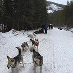 صورة فوتوغرافية لـ Snowy Owl Sled Dog Tours