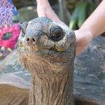 Your lovely Tortoise