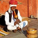 Snake - Jaipur