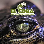 El Cora es el mejor lugar en donde aprender sobre la importancia de los cocodrilos en su ecosistema.  El Cora is the best place to learn about the importance of the crocodiles in the ecosistem.
