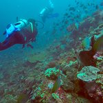 Uber Scuba Komodo Dive Center Foto