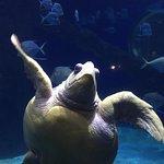 Bild från Virginia Aquarium & Marine Science Center