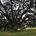 Oak Alley Plantation Foto