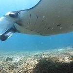 Foto de Wicked Diving, Komodo
