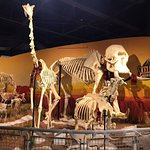 Photo de SKELETONS: Museum of Osteology