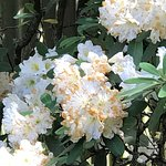 Foto National Rhododendron Gardens