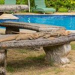 A couple of iguanas sunbathing