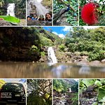 Make sure to add a stop at Waimea Valley and Waterfall on the North Shore of Oahu.