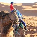 Trips Morocco Sahara照片