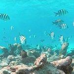 Koh Kaeo Snorkeling