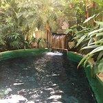 Bild från Paradise Hot Springs