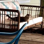 Otter on the deck.  He like to stay at the Oceanfront Inn, too.