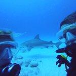 Photo de The Reef Marina