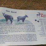 Kanan Pendari Zoo Park照片