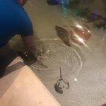 Φωτογραφία: Mandalay Bay Aquarium