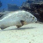 Diving Morro Jable Fuerteventura with Dive Pro Fuerte based in Costa Calma