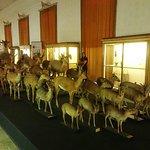 Cience Museum fényképe