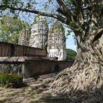 Een van de prachtige tempels omringd door majestueuze bomen