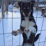 Extreme Huskies fényképe