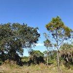 Billede af Emerson Point Preserve
