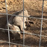 Foto de Animal World and Snake Farm Zoo