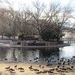 Foto de Duck Pond at UNM
