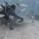 Bild från Phantom Divers