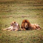 Foto de Wayo Africa