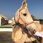 Beautiful Marwari horses