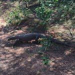 Photo de Elegant Safari