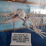 Killer Whale Museum의 사진