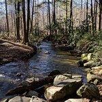 Fighting Creek Trail لوحة