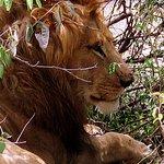 Foto de Bush 2 Beach Safaris