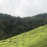Cameron Bharat Tea Estate Foto