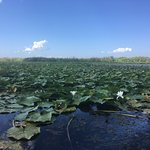 صورة فوتوغرافية لـ Danube Delta