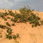 Senegal Raggi di Sole