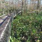 Foto de CREW Land & Water Trust - Bird Rookery Swamp Trails