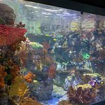 Foto de Birch Aquarium at Scripps