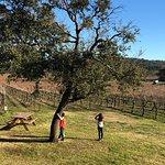 Perissos Vineyardsの写真