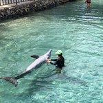 Bild från Moorea Dolphin Center