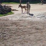 Photo of Auckland Zoo