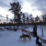 Foto de Lapland Sleddog Adventures