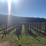 Sanford vineyards...