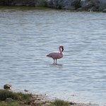 Lesser flamingo not far from Sowa Pan