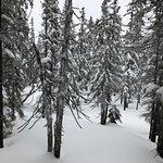 Skischule Bogei Filzmoos Picture