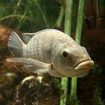 Foto de New York Aquarium