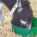 Bilde fra The Isle of Wight Donkey Sanctuary