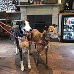 Foto de The Greyhound