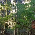 Photo of Redwood National Park